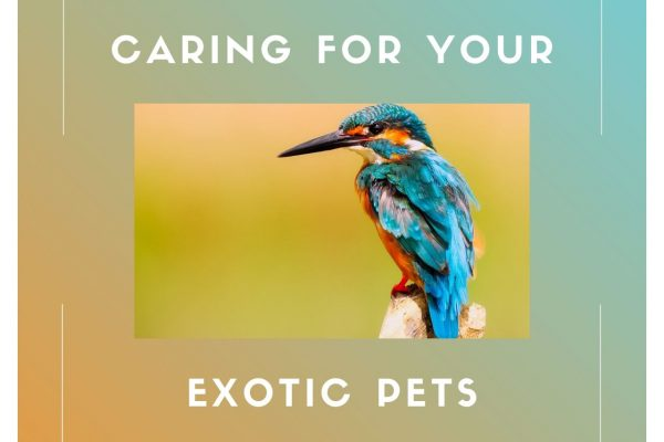 Reasons You Should Take Your Exotic Birds And Pets To A Veterinarian