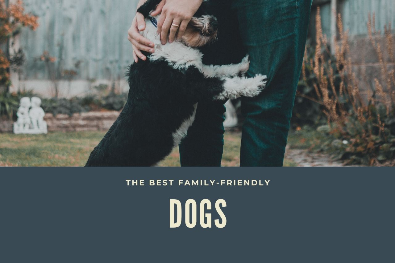 The Best Dogs For A Family's Home