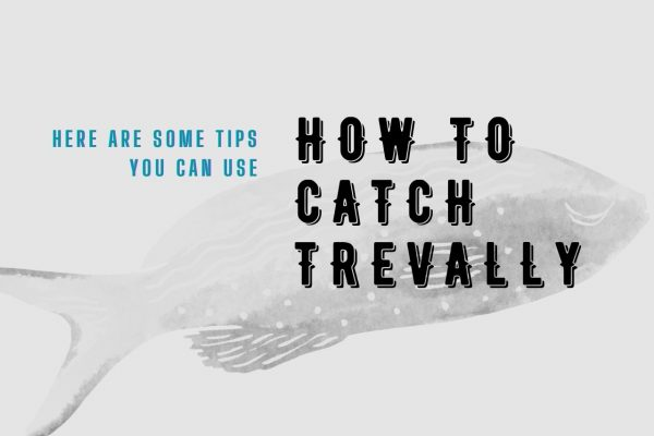 Some Tips On Catching Trevally